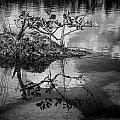 Everglades 0346 by Rudy Umans
