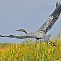 Everglades Flight by John Kearns