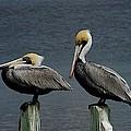 Everglades by Joseph Yarbrough