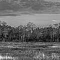 Everglades Panorama Bw by Debra and Dave Vanderlaan