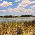 Everglades Pond by David Call
