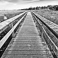 Everglades Trails by Eyzen M Kim