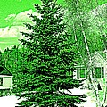 Evergreen by Barbara S Nickerson