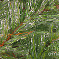 Evergreen Covered In Ice by David N. Davis