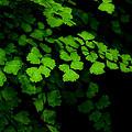 Evergreen by Lorenzo Cassina