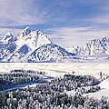 Evergreen Trees On A Snow Covered by Panoramic Images