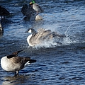 Everyone Duck by Bobbee Rickard
