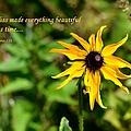 Everything Beautiful by Deena Stoddard