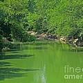 Everywhere Green by Ann Horn