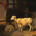 Ewe And Lambs by Mountain Dreams