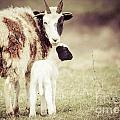 Ewe And Young by Cheryl Baxter
