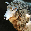 Ewe Are So Beautiful by Ellen Henneke