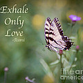 Exhale Only Love by Kerri Farley