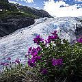 Exit Glacier by Kyle Lavey