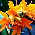 Exotic Orange by Karen Wiles