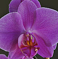 Exotic Orchid 2 by Jim Hogg