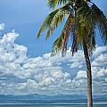 Exotic Palm Tree by Antony McAulay
