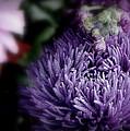 Exotic Purple Flower by Jeanette C Landstrom