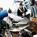 Expedition Great White Crew Conducts by Chris Ross
