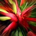 Exploding Lily by Andrea Platt