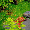 Exploration By A Red Footed Tortoise  by Sandra Pena de Ortiz