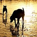 Exploring At Sunset by Laura Fasulo