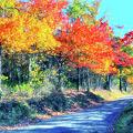 Explosion Of Color - Blue Ridge Mountains I by Dan Carmichael