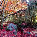 Exquisite Autumn by Cynthia Singleton
