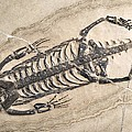 Extinct Reptile Skeleton by Science Photo Library