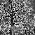 Extreme Contrast Bare Trees During Winter Photograph by Adri Turner