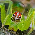 Extreme Macro Of A Spiders Face by Craig Lapsley