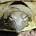 Eye Liner Turtle 8494 by Bonfire Photography