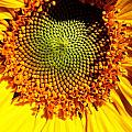 Eye Of A Sunflower by David Matthews