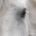 Eye Of Beauty by Smilin Eyes  Treasures