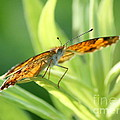 Eye Of The Butterfly by Neal Eslinger