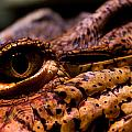 Eye Of The Dragon by Louis Shackleton