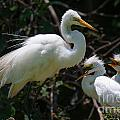 Eye Of The Egret by Dale Powell