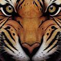 Eye Of The Tiger by Sebastian Plat