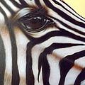 Eye Of The Zebra by Darren Robinson