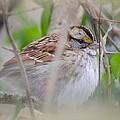 Eye On The Sparrow by Maria Urso