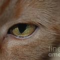 Eye See You by Mark McReynolds