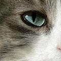 Eyes 2 by Laura Yamada