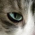 Eyes 3 by Laura Yamada
