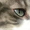 Eyes 4 by Laura Yamada