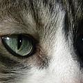 Eyes 5 by Laura Yamada