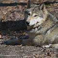Wolf Eyes by Lynn Greever