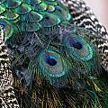 Eyes On My Back by Davandra Cribbie