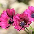 Fabulous Colour by Sue Chisholm