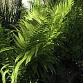 Fabulous Ferns  by D L Gerring