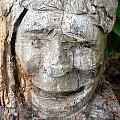 Face In A Tree by Amy Fose